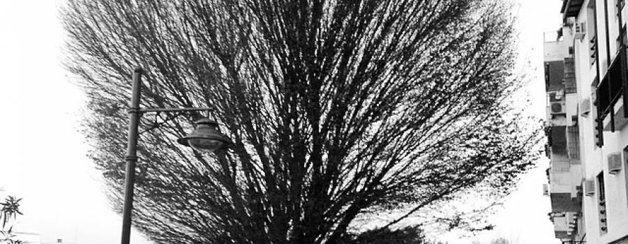 Aprende A Decir NO Sin Esfuerzo: Decide Qué Árboles Cortar